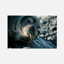 Basking Weddell seal - Rectangle Magnet