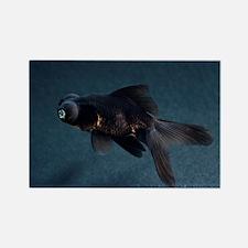 Black Moor ornamental fish - Rectangle Magnet