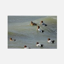 Eurasian wigeons - Rectangle Magnet