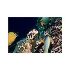 Hawksbill turtle feeding - Rectangle Magnet