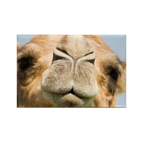 Dromedary camel - Rectangle Magnet