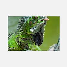 Green iguana - Rectangle Magnet