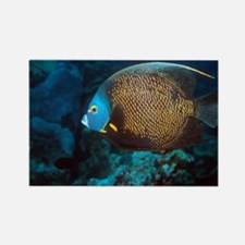 French angelfish - Rectangle Magnet