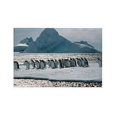 Gentoo penguins - Rectangle Magnet