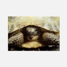 Horsfield tortoise - Rectangle Magnet