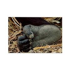 Gorilla's foot - Rectangle Magnet