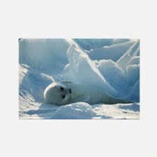 Harp seal pup - Rectangle Magnet