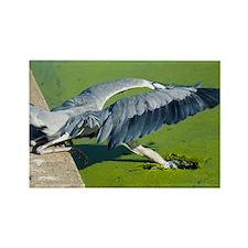 Grey heron - Rectangle Magnet