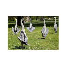 Grey herons - Rectangle Magnet