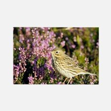 Meadow pipit - Rectangle Magnet