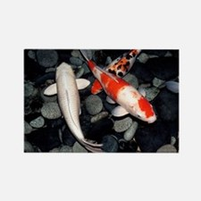 Koi carp in a pond - Rectangle Magnet