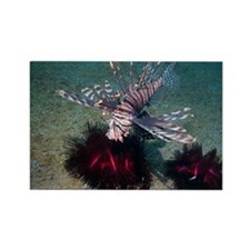 Lionfish - Rectangle Magnet