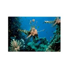 Lionfish on a reef - Rectangle Magnet