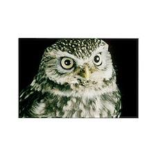 Little owl - Rectangle Magnet