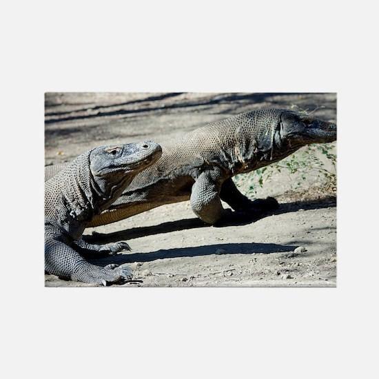 Komodo dragons - Rectangle Magnet
