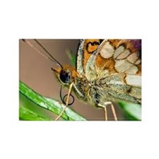 Marbles Fritillary Butterfly - Rectangle Magnet