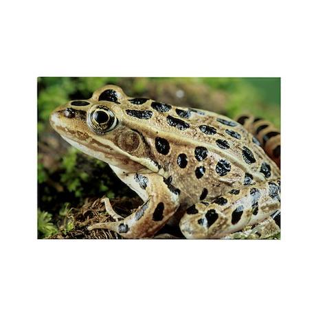 Leopard frog - Rectangle Magnet