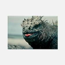 Marine iguana - Rectangle Magnet