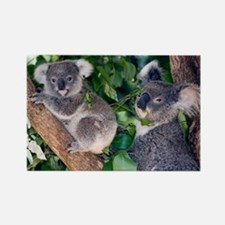 Mother koala and young - Rectangle Magnet