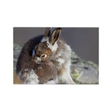 Mountain hare moulting - Rectangle Magnet