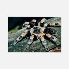 Mexican redknee tarantula - Rectangle Magnet