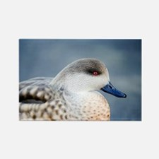 Patagonian crested duck drake - Rectangle Magnet
