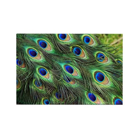 Peacock feathers - Rectangle Magnet