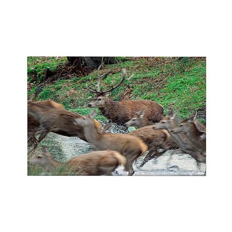 Red deer herd - Rectangle Magnet