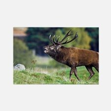 Rutting red deer stag - Rectangle Magnet