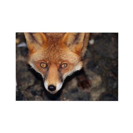 Red fox - Rectangle Magnet
