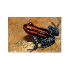 Poison arrow frog - Rectangle Magnet
