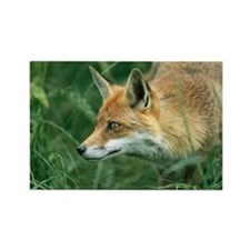 Red fox hunting - Rectangle Magnet