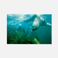 Southern fur seal - Rectangle Magnet