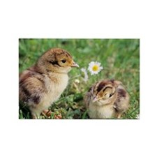 Pheasant chicks - Rectangle Magnet