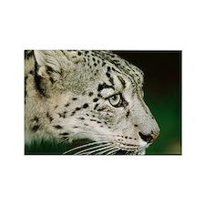 Snow leopard - Rectangle Magnet