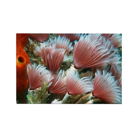 Feather Duster Worm Baby Social feather ...