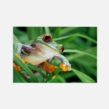 Red-eyed tree frog - Rectangle Magnet