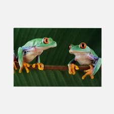 Red-eyed tree frogs - Rectangle Magnet