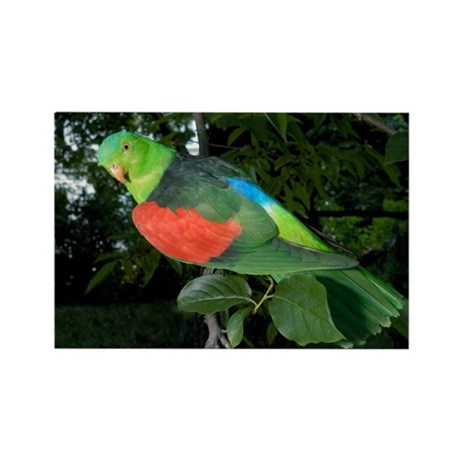 Red-winged parrot - Rectangle Magnet