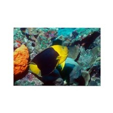 Rock beauty angelfish - Rectangle Magnet