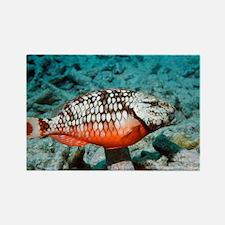 Stoplight parrotfish - Rectangle Magnet