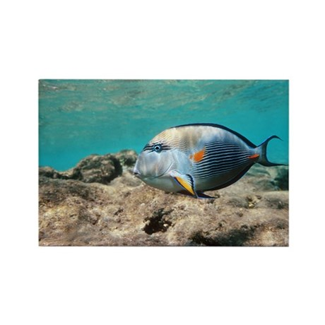Sohal surgeonfish - Rectangle Magnet