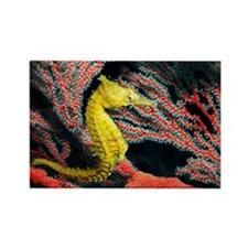 Thorny seahorse - Rectangle Magnet