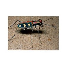 Tiger beetle - Rectangle Magnet