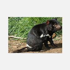 Tasmanian devil - Rectangle Magnet
