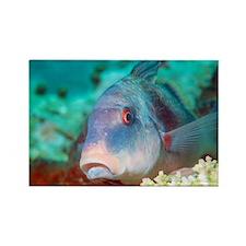 Two-banded goatfish - Rectangle Magnet
