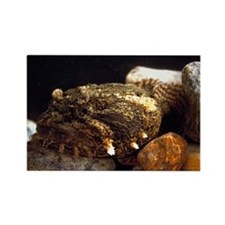 Toadfish - Rectangle Magnet