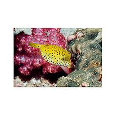 Yellow boxfish - Rectangle Magnet