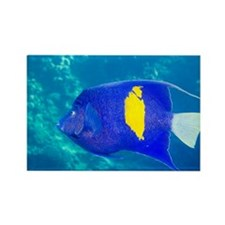 Yellowbar angelfish - Rectangle Magnet