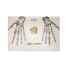 Hand bones and ligaments - Rectangle Magnet